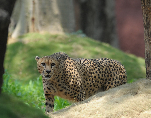 Nehru Zoological Park is one of the three most visited destinations in Hyderabad.