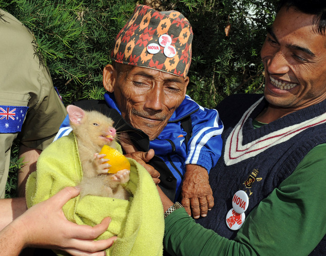 Chandra Bahadur Dangi (L), the 72-year-old Nepali crowned the 'world's shortest man' by Guinness World Records, and his nephew Dolakh Dangi (R) meet Bailey the golden brush-tail possum at Wildlife World in Sydney.