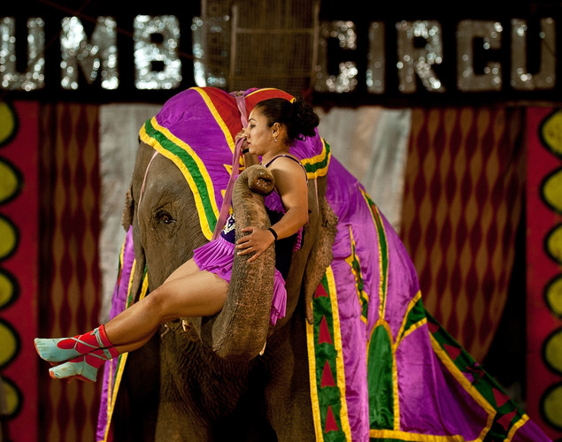 A performer is lifted by an elephant at the Jumbo Circus in Gurgaon.