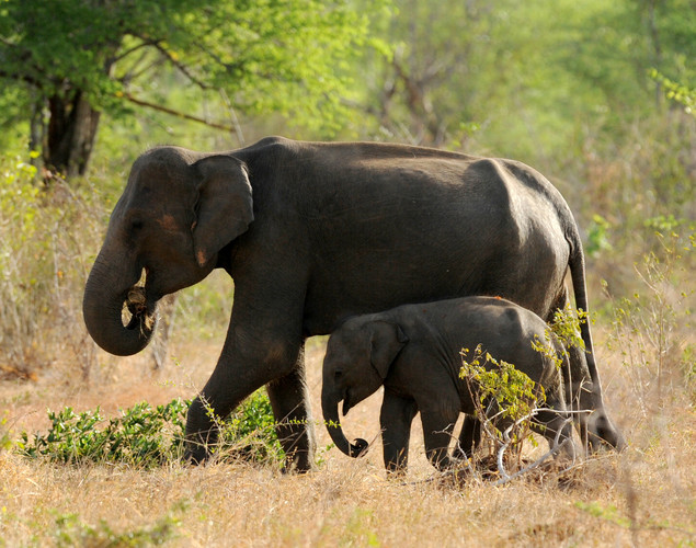 A herd of about 250 elephants are thought to be permanent residents.