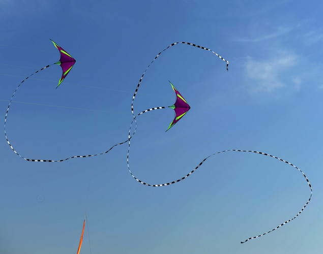 Kites fly during the Delhi International Kite Festival 2012 on the lawns of the India Gate monument in New Delhi.