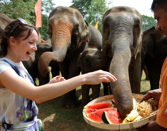 A foreign visitor feeds elephants at the Pinnawela Elephant Orphanage in Pinnawela.