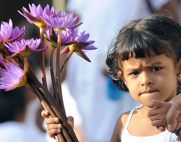 A Sri Lankan Buddhist devotee holds flowers as she offers prayers during Vesak at the Temple in Colombo.