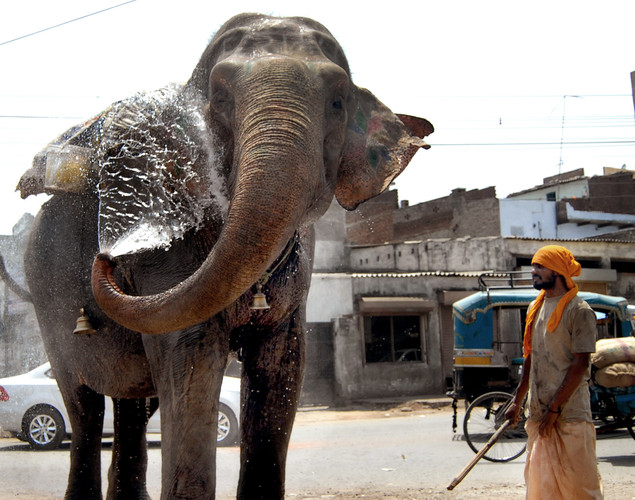 An elephant sprays water from its keeper to stay cool during a heat wave at Jalandhar in Punjab state.