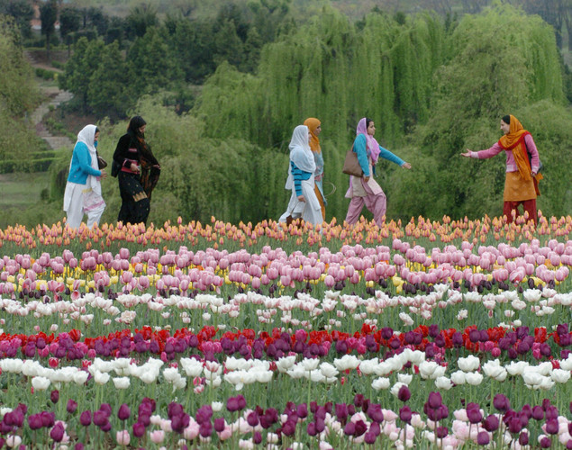 Kashmiri girls take a stroll in Srinagar's Tulip garden, claimed to be Asia's largest.