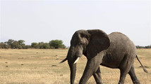 Tanzania president says poaching boom threatens elephant population