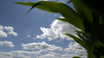 Ethanol's rise can mean loss of hunting lands