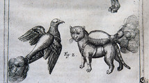 16th-century manual shows 'rocket cat' weaponry