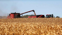 SD corn harvest near done; low prices big concern