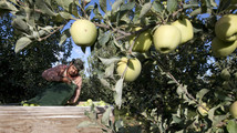 China seeking to export apples to US
