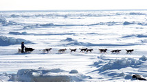 Iditarod sled dog race kicks off this weekend