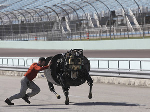 A team member shoves an LS 3 robot that was galloping off course, back on track, during demonstration in Homestead, Florida