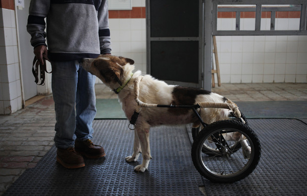 Animal abuse, theft remains widespread in Jordan