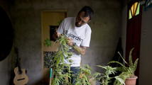 Uruguay's legal pot plan on verge of adoption