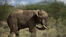 Urgent deal reached for African elephants