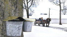 Relentless winter delays Ohio's maple syrup season