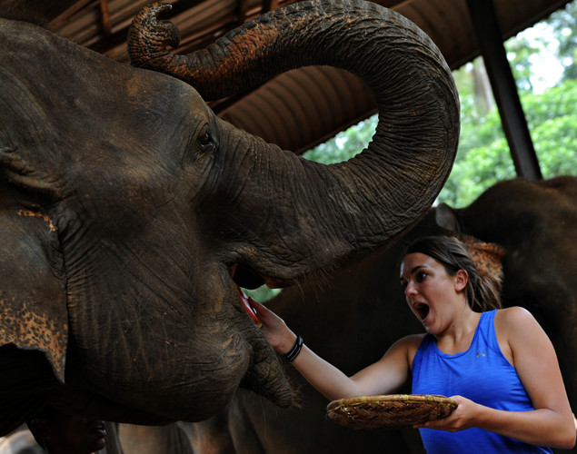 A foreign visitor feeds an elephant at the Pinnawela Elephant Orphanage in Pinnawela.