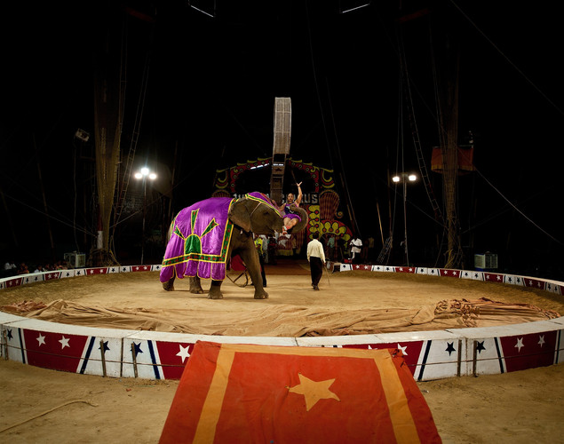 An Indian artist performs with an elephant at the Jumbo Circus in Gurgaon.