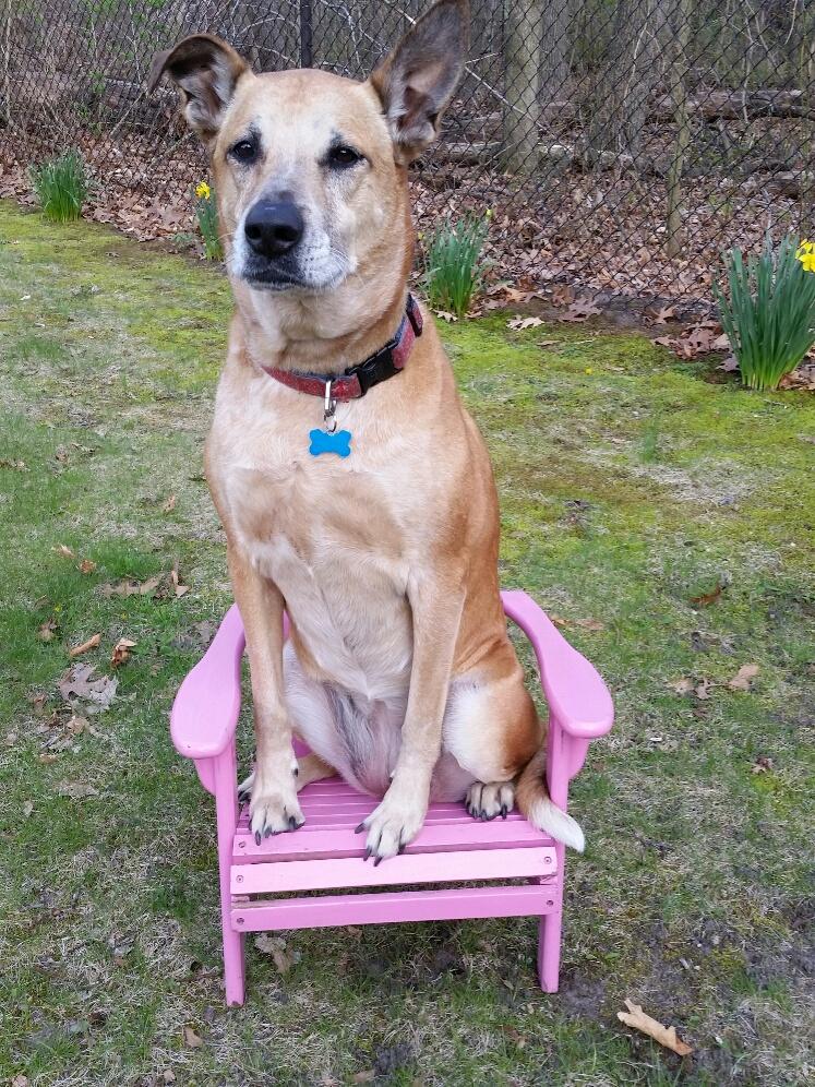 Lucille tiny chair.jpg