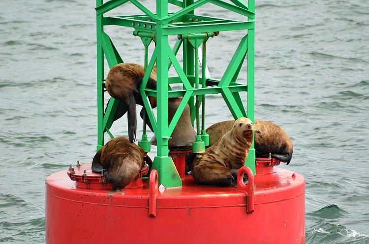 wildlife cruise juneau alaska